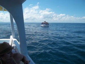 Whale-Watching-Samana-Bay